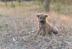 Young puppies in need of care. Protection and love to live another day Royalty Free Stock Photo