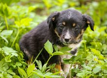 Young puppy dog photographed outdoors in the grass. Young puppy dog photographed outdoors on grass in garden royalty free stock photo
