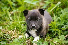 Young puppy dog photographed outdoors in the grass. Young puppy dog photographed outdoors on grass in garden stock images