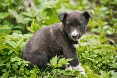Young puppy dog photographed outdoors. Help for homeless animals. royalty free stock images