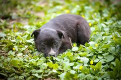 Young puppy dog photographed outdoors. On grass in garden stock images