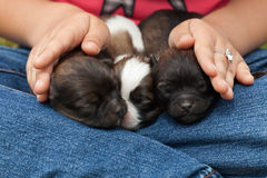 Young puppy dogs sleeping protectected Royalty Free Stock Images