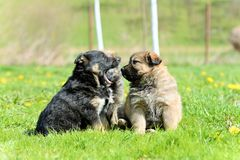 Young puppy Stock Images
