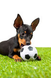 Young puppy, lies down with football Royalty Free Stock Photos