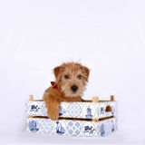 Young puppy sitting in a wooden crate royalty free stock photography