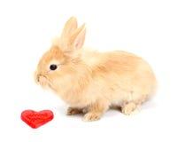 Young rabbit Stock Photos