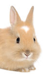 Young Rabbit Stock Images