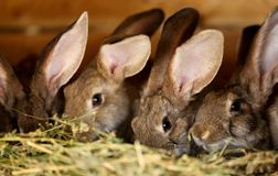 Young rabbit animal farm and breeding. stock images