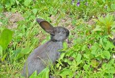 Young rabbit 1 Stock Photo