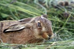 Young rabbit in the grass Stock Photo