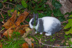 Young rabbit among vegetation Stock Photo