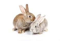 Young rabbits Royalty Free Stock Photos