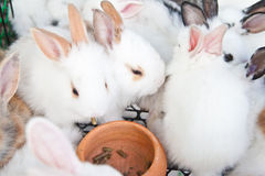 Young rabbits Royalty Free Stock Images