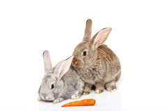 Young rabbits Stock Image