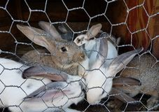 Young rabbits in the cage, in the country. stock photo