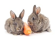 Young rabbits that eat carrots. Young rabbits that eat carrots on a white background Royalty Free Stock Images