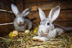 Young rabbits in a hutch Stock Photos