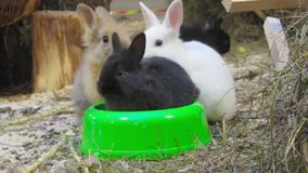 Young rabbits stock video footage