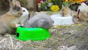 Young rabbits stock footage