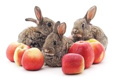 Young rabbits and red apples. Royalty Free Stock Image