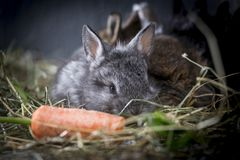 Young rabbits. royalty free stock images