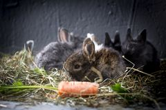Young rabbits. royalty free stock photo