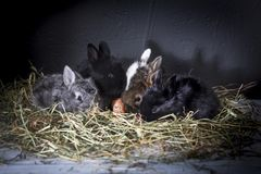 Young rabbits. royalty free stock photography