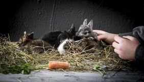 Young rabbits. stock photography