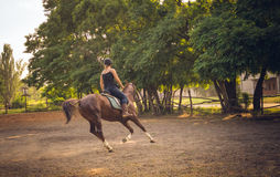 Young race horse in the arena for training. Young girl rider coached in the arena racehorse. Horse riding. Friendship, trust and partnership Royalty Free Stock Photo