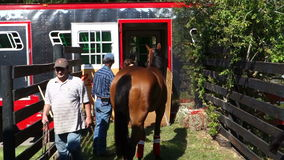 Young racehorse being loaded into a trailer at a farm in florida stock video footage