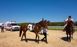 A young racehorse being walked after a race at tampa Royalty Free Stock Photo