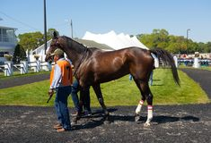 A young racehorse being walked before a race at tampa Stock Images