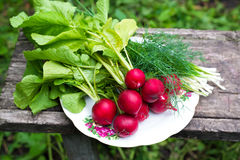 Young radishes and green onions Stock Photography