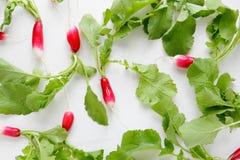 Young radishes on white background Stock Photography