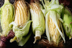 Young raw corn cobs Royalty Free Stock Images