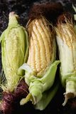 Young raw corn cobs Stock Images