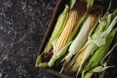 Young raw corn cobs Royalty Free Stock Photography