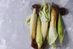 Young raw corn cobs Royalty Free Stock Photos