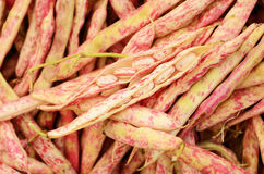Young red beans at vegetable market Royalty Free Stock Photo