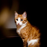 Young red cat with big green eyes Stock Images