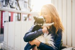 A young red-haired Caucasian woman holds a small funny dog in the arms of two colors of black and white chihuahua. Hugs and kisses. Love shows against a white Stock Photos