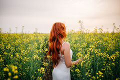 Young red-haired woman in a rapeseed field Stock Image