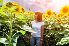 Woman in a sunflower. A young red-haired woman in a white T-shirt and jeans smiles and enjoys a summer walk in a sunflower field against a blue sky on a warm stock images
