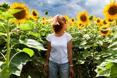 Woman in a sunflower. A young red-haired woman in a white T-shirt and jeans smiles and enjoys a summer walk in a sunflower field against a blue sky on a warm stock photos