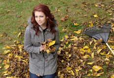 Young red-heaired woman outiside on fall day  - raking leaves Royalty Free Stock Image