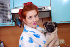 The young red housewife about hair curlers in kitchen holds in hand a puppy a pug Stock Photo