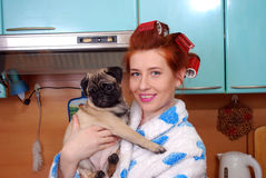 The young red housewife about hair curlers in kitchen holds in hand a puppy a pug Royalty Free Stock Photography