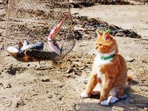 Young red maine coon and fish. Outdoor portrait royalty free stock photography