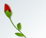Young red rose text card Stock Images
