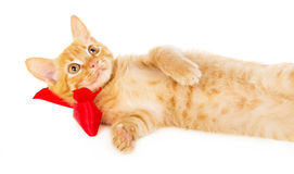 Young redhead cat lies on the floor in the red ribbon Royalty Free Stock Image